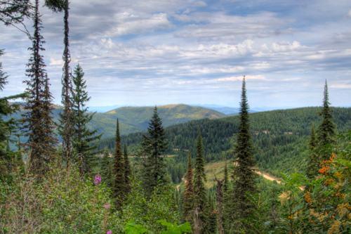 Trails at Mount Spokane State Park